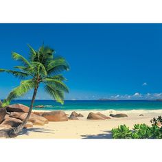 Seychelles – Perfect Place for Perfect Vacation - Seychelles Beach Mural Strand Wallpaper, Beach Wallpaper, Tree Wallpaper, Photo Wallpaper, Wallpaper Murals, Nature Wallpaper, Paradise Wallpaper, Vinyl Wallpaper, Exotic Beaches