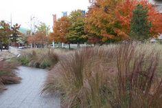 Urban Prairie | Gatineau Canada | Claude Cormier + Associés with Aedifica - World Landscape Architecture World Landscape Architecture