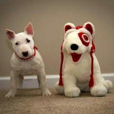 Target Dog Puppy