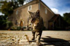 Котка се разхожда в селски двор в градчето Дона, Германия. Последните топли дни са подходящи за ловуване из полето. Според метеоролозите през следващите няколко дни температурите ще се задържат около 17 градуса и ще е слънчево.