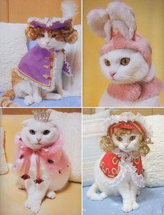 fashion_cats2.jpg (530×695)