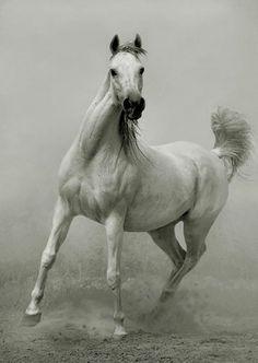 Photographer Wojtek Kwiatkowski – horses {Part 2}