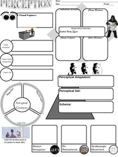 Psychology Perception Graphic Organizer for Key Concepts