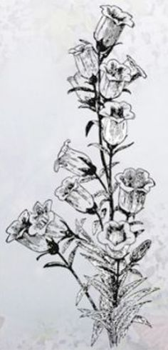 "Clear Stamp-Flowers-Campanula. A clear stamp featuring a beautiful floral arrangement perfect for spring/summer/sympathy cards.    1 stamp    Size: 1.97"" x 3.94"""