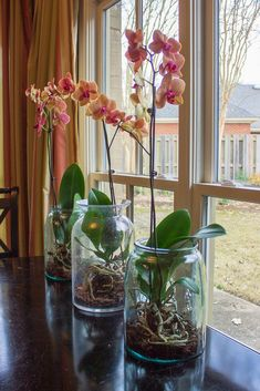 For a pretty display on my kitchen table, I decided to kopy kat an idea I saw in the January issue of Better Homes and Garde. For a pretty display on my kitchen table, I decided to Orchids In Water, Indoor Orchids, Orchids Garden, Cymbidium Orchids, Indoor Plants, Purple Orchids, Water Culture Orchids, Indoor Water Garden, Garden Urns