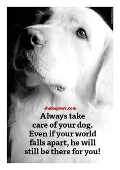 Repinned by nextstepservicedogs.org #nextstepservicedogs @nextstepservicedogs