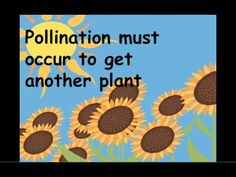 Twelve plant videos for students that are a perfect complement to a plant unit. Includes suggested grade ranges and a short description of each video.