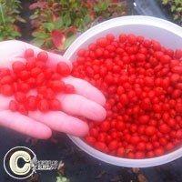 Bactriosol FraisiersPetits fruits HORTIFLOR BUREAU Potager