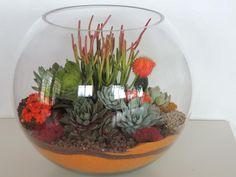 """Succulent Terrarium 8"""""""
