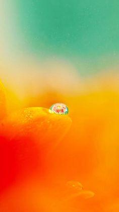 Nature Blurry Pure Orange Flower Petal Dew Waterdrop iPhone 6 wallpaper