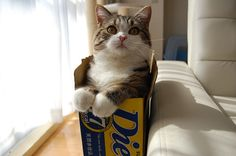 I need to find a good resource for a kittens by the box...Maru: The Interview