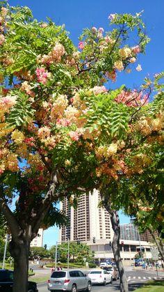 Hiltonの前にて #hawaii,#Honolulu,#hawaii