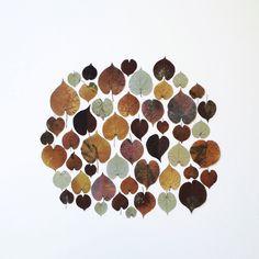 Leaf pattern | VSCO Cam