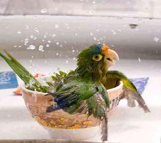 Смешные и забавные фотографии из мира животных