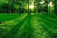 bahçe gübresi 05336543961: bahçe gübresi ankara