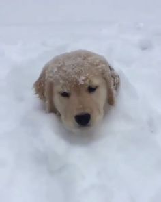 Labs and retrievers are better cute funny animals, cute baby animals, funny dogs, Cute Baby Dogs, Cute Funny Dogs, Cute Dogs And Puppies, Cute Funny Animals, Cutest Dogs, Big Dogs, Small Dogs, Baby Cats, Doggies