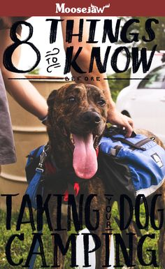 Hiking and camping with your dog can be tricky but rewarding. We put together a comprehensive article about the dos and don'ts of hiking with your pupper along with things to bring and the stuff you can leave home.