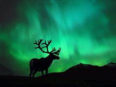North Pole Northern Lights