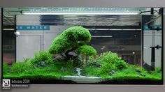 A tree made ofHemianthus Callitrichoides, probably the best tank from the 2014 Interzoo, held last week in Nurenberg