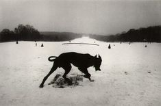 claytoncubitt:  Josef Koudelka, 'Hauts-de-Seine. Parc de Sceaux. France' 1987 (black dog in snow)