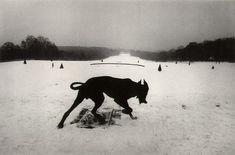 claytoncubitt:  Josef Koudelka, 'Hauts-de-Seine. Parc de Sceaux. France' 1987 (black dog in snow)