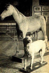 Napoleon's stuffed horse and dog