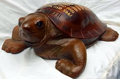 The Story Of Illibuck: The Most Interesting Turtle In The World - The Champaign Room