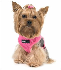 puppia soft harness -  this is the exact one my little one (Rhiley) has....she loves it!