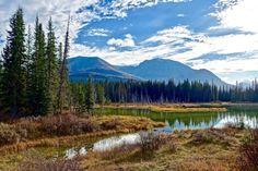 New free stock photo of wood landscape nature