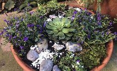 Deco, Succulents, Plants, Blog, Decor, Succulent Plants, Blogging, Deko, Plant