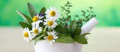 5 plantes médicinales à faire pousser dans son jardin — Serengo