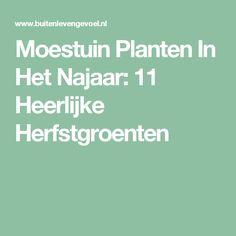Moestuin Planten In Het Najaar: 11 Heerlijke Herfstgroenten