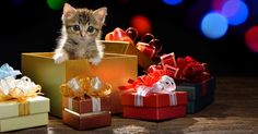 file_2399_what-is-the-best-christmas-gift-for-a-cat.jpg 1 200 × 630 pixlar