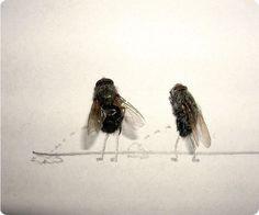 La vie des mouches