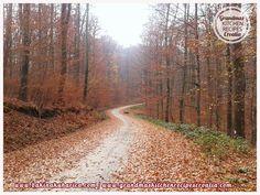 Jesen - Autumn, Croatia, wood