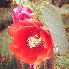 Westward Look Resort & Spa in Tucson, AZ | @lovebergss photo