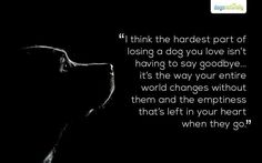 i think the hardest part of losing a dog Pet Quotes Dog, Animal Quotes, Lost Dog Quotes, Dog Heaven Quotes, I Love Dogs, Puppy Love, Miss My Dog, Pet Loss Grief, Pet Remembrance