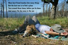 Quotes about dogs. Dog Quotes Funny, Funny Dogs, Mans Best Friend, Best Friends, You Lied, Felt Hearts, Best Dogs, Dog Lovers, Beat Friends