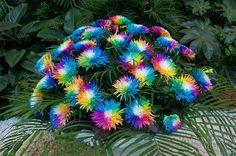 20Pcs Rainbow Chrysanthemum Flower Seeds Rare Color Home Garden Bonsai Plant - Newchic Mobile.