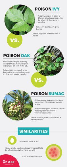 Poison ivy vs. poison oak vs. poison sumac - Dr. Axe http://www.draxe.com #health #holistic #natural