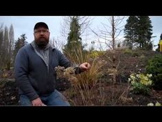 You Tube video Gardening tips: Pruning Hydrangea Annabelle