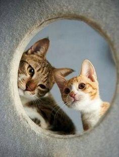 Alguien ahí?!