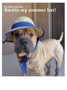 summer hat, shar pei