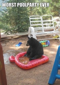 Dump A Day Attack Of The Funny Animals - 24 Pics -- Hahahaha it a bear siting in a bear pool look see the ear. Animals And Pets, Funny Animals, Cute Animals, Animal Fun, Animals Amazing, Happy Animals, Wild Animals, Most Famous Memes, Carnivore