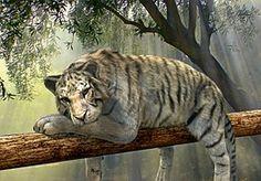 Tiger, Animal, Jungle, Rainforest