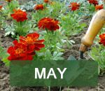 In The Garden This Month and Gardening Ideas | Thompson & Morgan