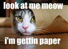 Gettin paper
