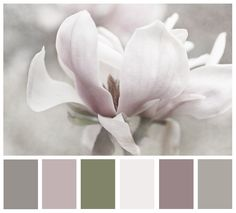 "Magnolia Print. Soft natural palette. ""Moody"" from kelly*n photography"