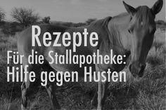 Hustet das Pferd, horcht jeder Pferdebesitzer auf, was auch richtig ist. Die Pferdelunge ist sehr sensibel und bei andauerndem Husten können sich irreparable Lungenschäden einstellen. Nun heißt aber ein einzelner Huster nicht, dass gleich Antibiotika, Cortison und Co zum Einsatz kommen müssen. Oft helfen Kräuter sehr gut die Atemwege des Pferdes wieder zu befreien. Hier ein Rezept für einen Hustensaft, den jeder selber machen kann.