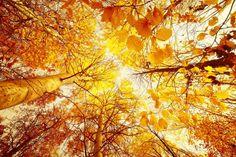 Equinozio d'autunno, 23 settembre 2015: le immagini più belle [FOTO]